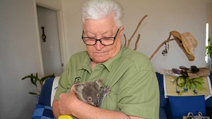 CASUALTIES: Merilyn Spletter of the Ipswich Koala Society says koalas are being hit by careless drivers.