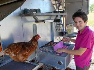 CQ egg farmer backs industry survey on hen treatment