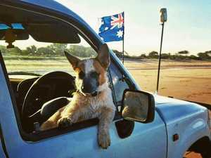 DOGS OF GLADSTONE: Every day's a dog day for Gladdy pooches