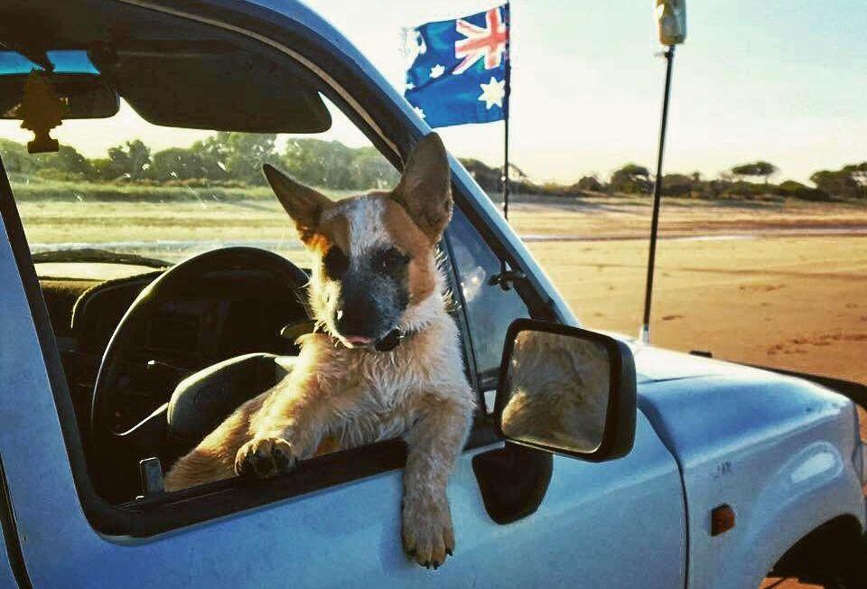 AUSSIE SPIRIT: Braydon Chadwick's dog takes a ride as a pup.