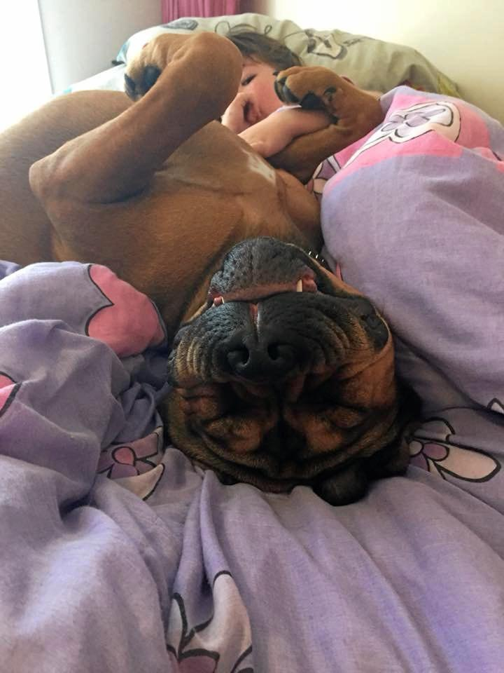 Snuggling up with his owners, sent in by Anita Jones.