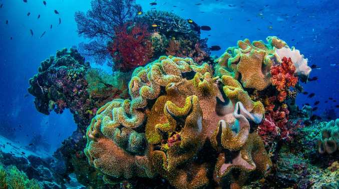 """The grant to the Great Barrier Reef Foundation likely helped the Government to meet its commitments to UNESCO in a bid to keep the Reef off the """"in danger"""" list."""