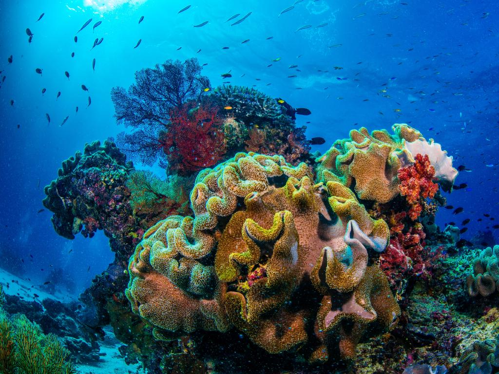"The grant to the Great Barrier Reef Foundation likely helped the Government to meet its commitments to UNESCO in a bid to keep the Reef off the ""in danger"" list."
