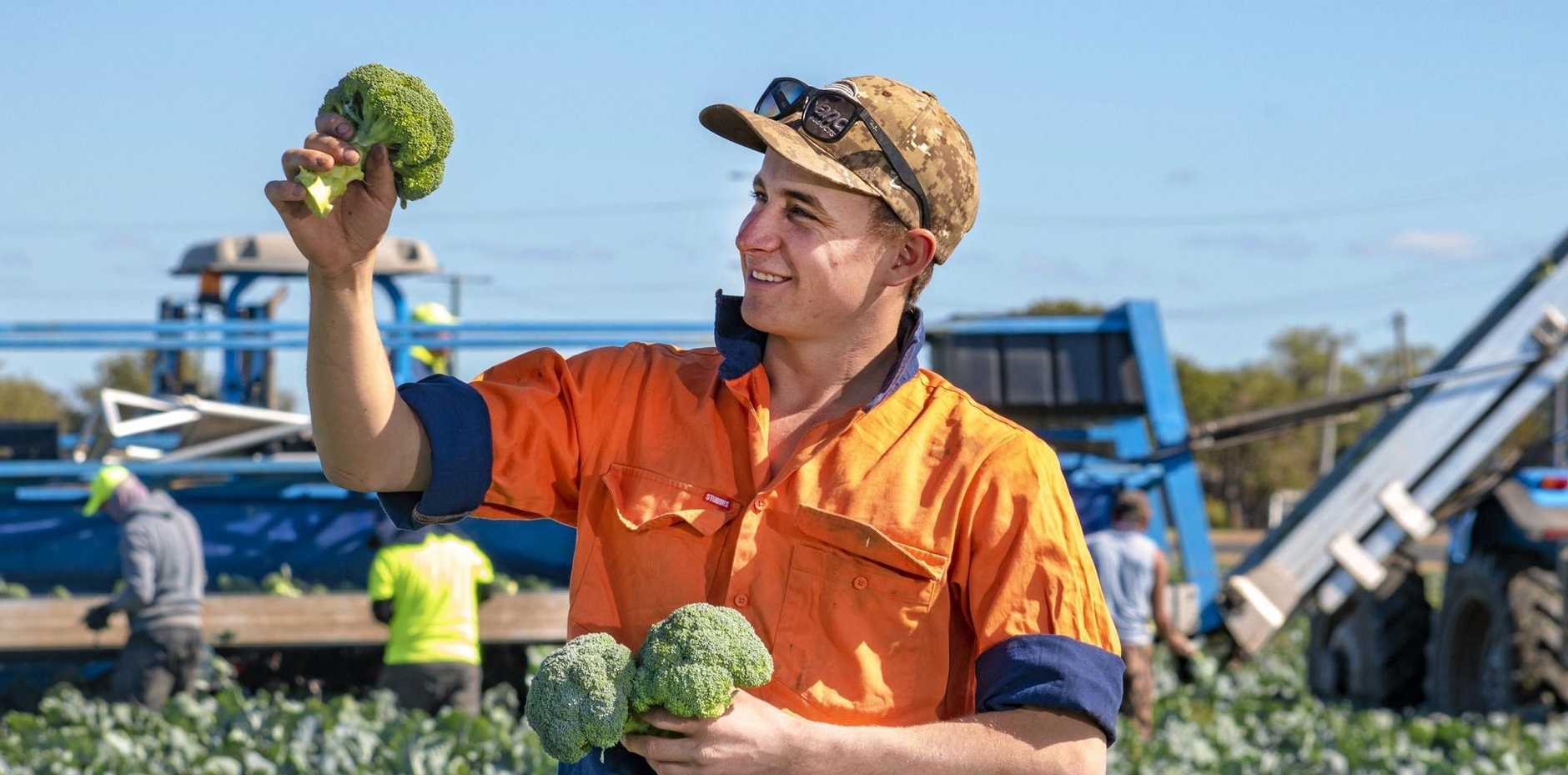 QUALITY: Forest Hill farmer Mitch Brimblecombe, Moira Farms, inspects some broccoli, while contract workers harvest in the background.