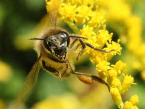 Bird vomit helping to protect bees