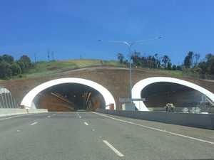 Koala trapped in St Helena tunnel