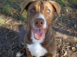 Playful pets in need of a home