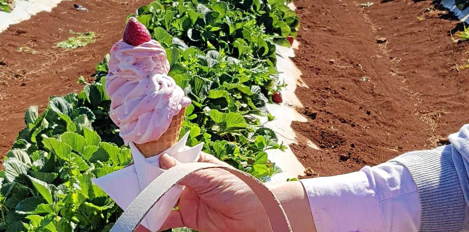 GET INVOLVED: Pick your own strawberries at Tinaberries.