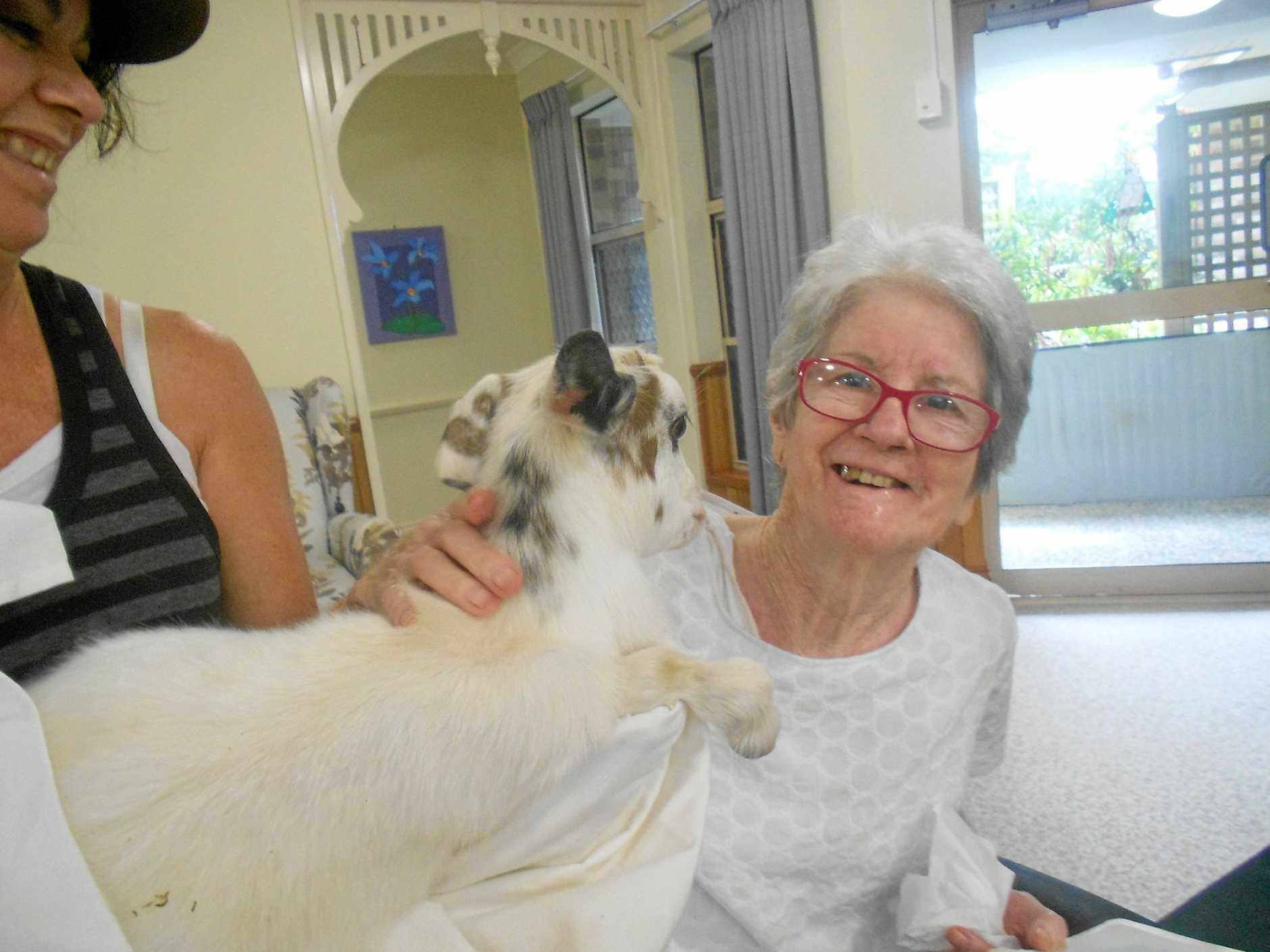 TriCare Kawana Waters resident Clare Evans taking part in the pet therapy program.