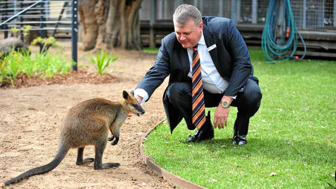 ENVIRONMENTALIST: Cr Wayne Honor with Rusty the swamp wallaby at the Alexandra Park Zoo. Photo: Mike Knott / NewsMail