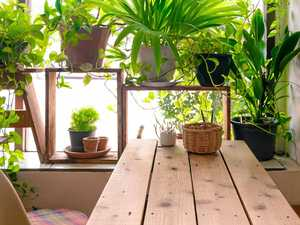 Lift the look of your rooms with indoor plants