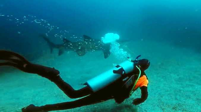 Byron Bay scuba diving instructor Inaki Aizpun pulled a large fishing net from the jaws of a 2m grey nurse shark.