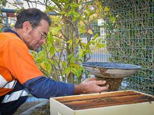 New Auckland Bee Swarm