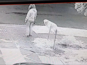 Foul play: 'Poo dogger' caught in the act