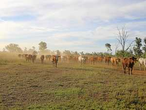 SCAM: Drought-hit farmers targeted by fake hunters