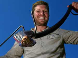 Catcher stops highly venomous snake 'tangling' with traffic