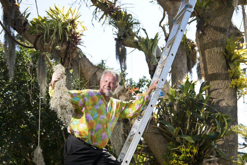 Carnival garden competition entrant David Stanfield is frustrated by birds taking the old man's beard from his cloud forrest tree, Monday, August 20, 2018.