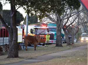 Cattle truck crash cleanup expected to last into the night