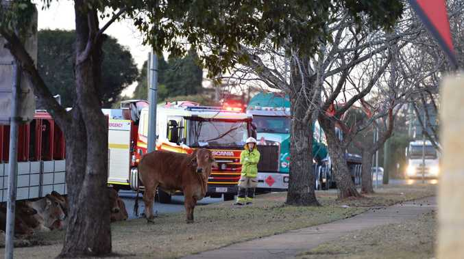 A cattle truck rolled over at the Corner of Cohoe St and James St on Monday afternoon.