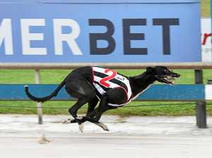 GREYHOUNDS: Fernando marked for finals spree