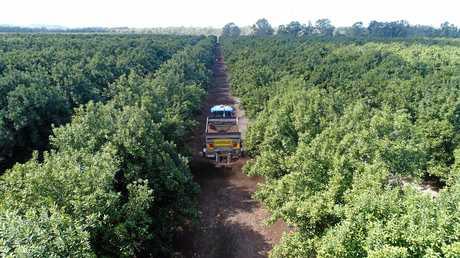 LGIAsuper has purchased a significant percentage of Fitzroy River macadamia farm near Yaamba.