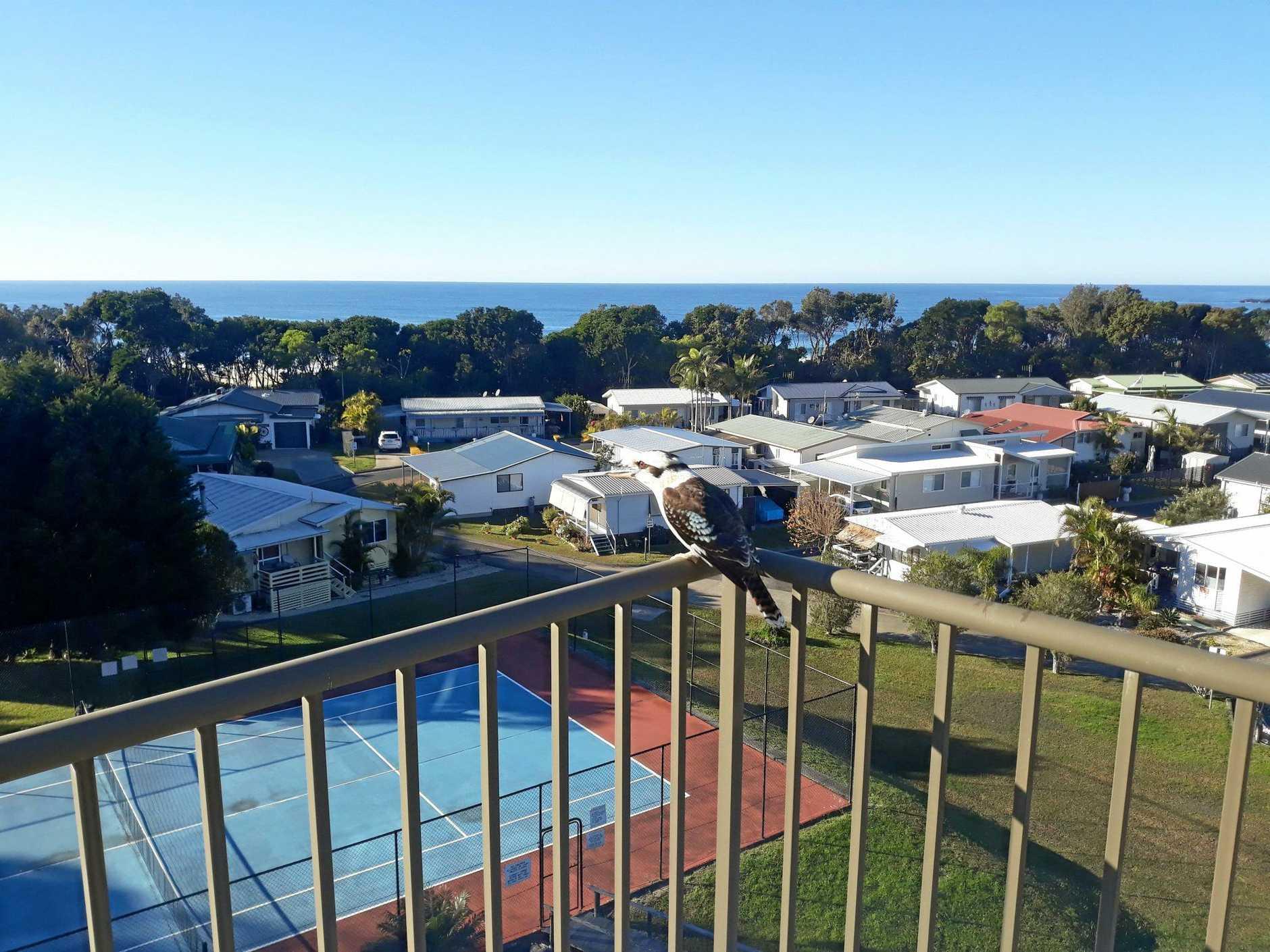 Beachfront, Kookaburra and a view.