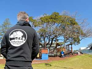Iconic Moffat Beach fig tree under threat