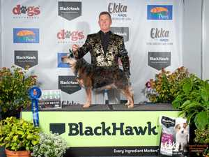 Burnett competitor named top dog at Ekka