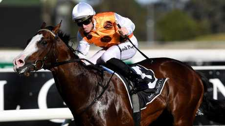 Retired sprinter Menari will stand at Newgate Farm this spring. Picture: AAP