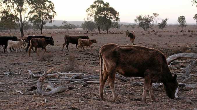 North Queensland farmers' debt levels more than $2 billion.