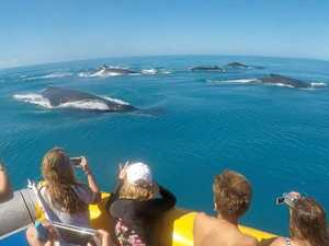 Incredible shot of whales off Hook Island