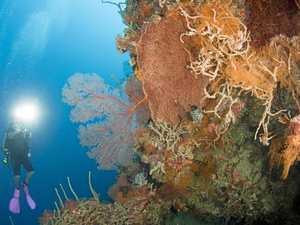 Diving into delights of Hideaway Island reefs