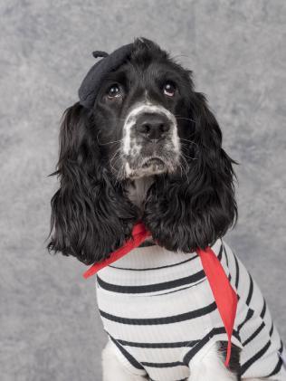 Leni, a lover of liberté, égalité, fraternité. (Pic: Dog Photog)