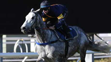 Chautauqua will trial between races at Rosehill on Saturday. Picture: AAP