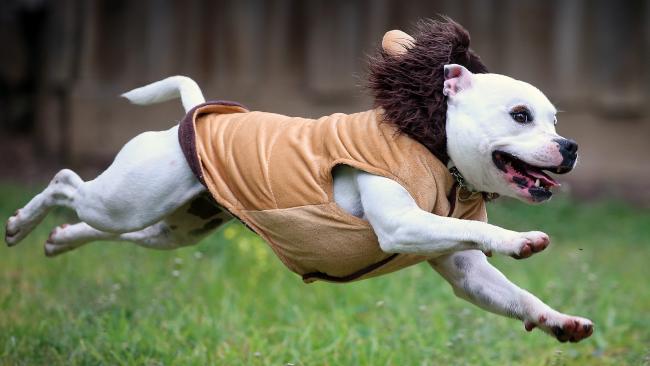 Go Evie, go! (Pic: Alex Coppel)