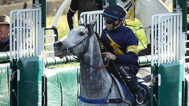 Connections are hoping Chautauqua jumps cleanly in his trial on Saturday. Picture: Getty Images