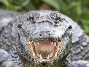 Terror as huge croc attacks fishing boat