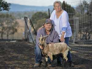 Edna-Mae, three goats and 'Mystery Mike' reunited after fire