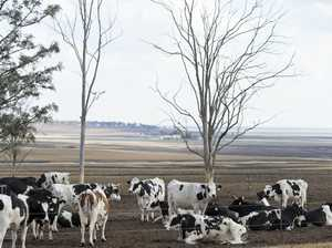 Dairy industry crisis taking heavy toll farming families
