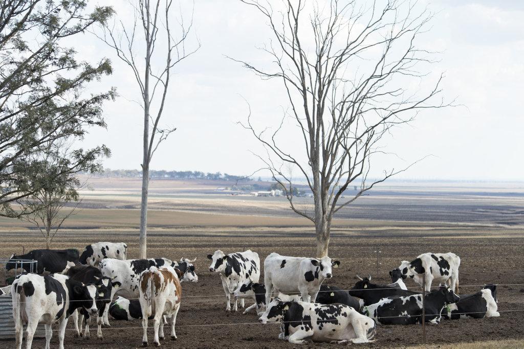 Dairy Farmers.