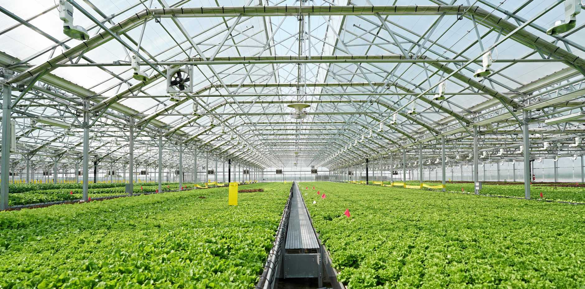 Gotham Greens' rooftop greenhouse in Pullman, Chicago, which is the largest in the world.