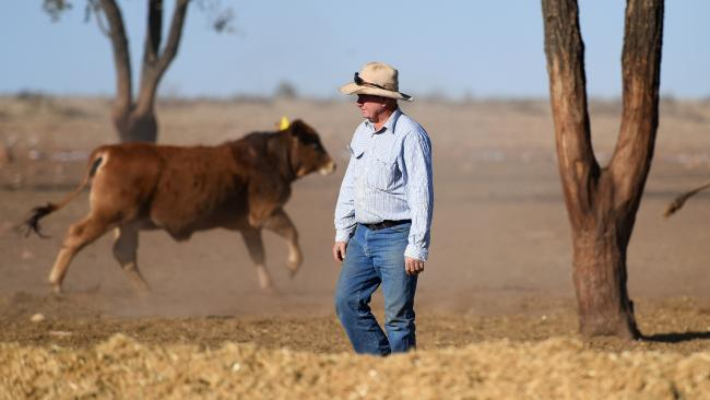 "Farmer Peter ""PJ"" Cookson checks on cattle in a feedlot on his Koomalah property near Dirranbandi, Queensland. Picture: AAP/Dan Peled"