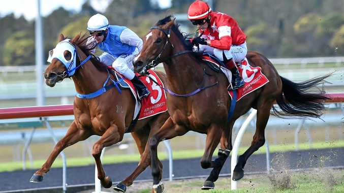 WINNER: Hold The Line wins the The Beach Houses Holiday Apartments Cotton Tree QTIS 3yo Handicap (1200m).