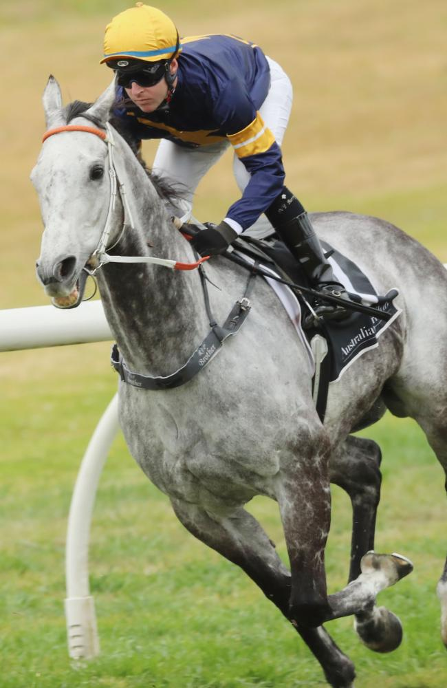 Tommy Berry and Chautauqua during Saturday's crucial barrier trial at Rosehill Gardens.
