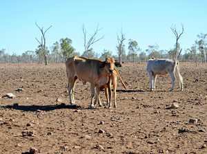 New taskforce to organise overwhelming drought response