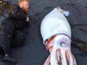 Divers pose with 'monster' squid