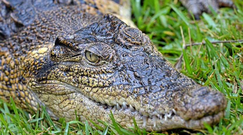 Crocodile culling proved a hot topic at Mackay's filming of Q&A Monday night.