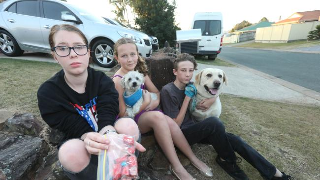 Pictured at their Ormeau home the Brown children Danika, 14, Tayla, 12, and Jordan, 14, and their dogs Oscar and Marley with sausages laced with rat sak. Picture Mike Batterham.
