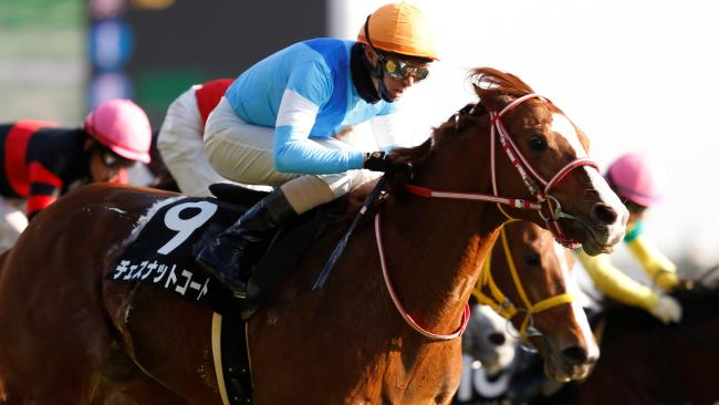 Japanese raider Chestnut Coat has been the biggest firmer for the Melbourne Cup.