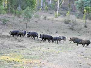 Council to help farmers control feral animals